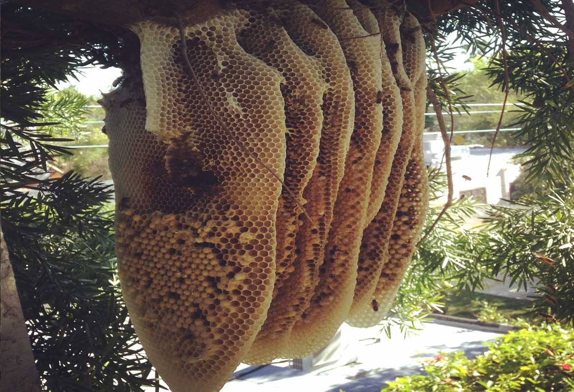 Removing Honeycomb