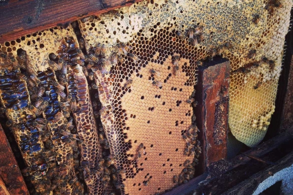 Bee Hive Amp Swarm Removal Services For Los Angeles Orange